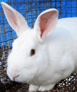 Office Bunny